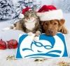 Weihnachten 2 657807439